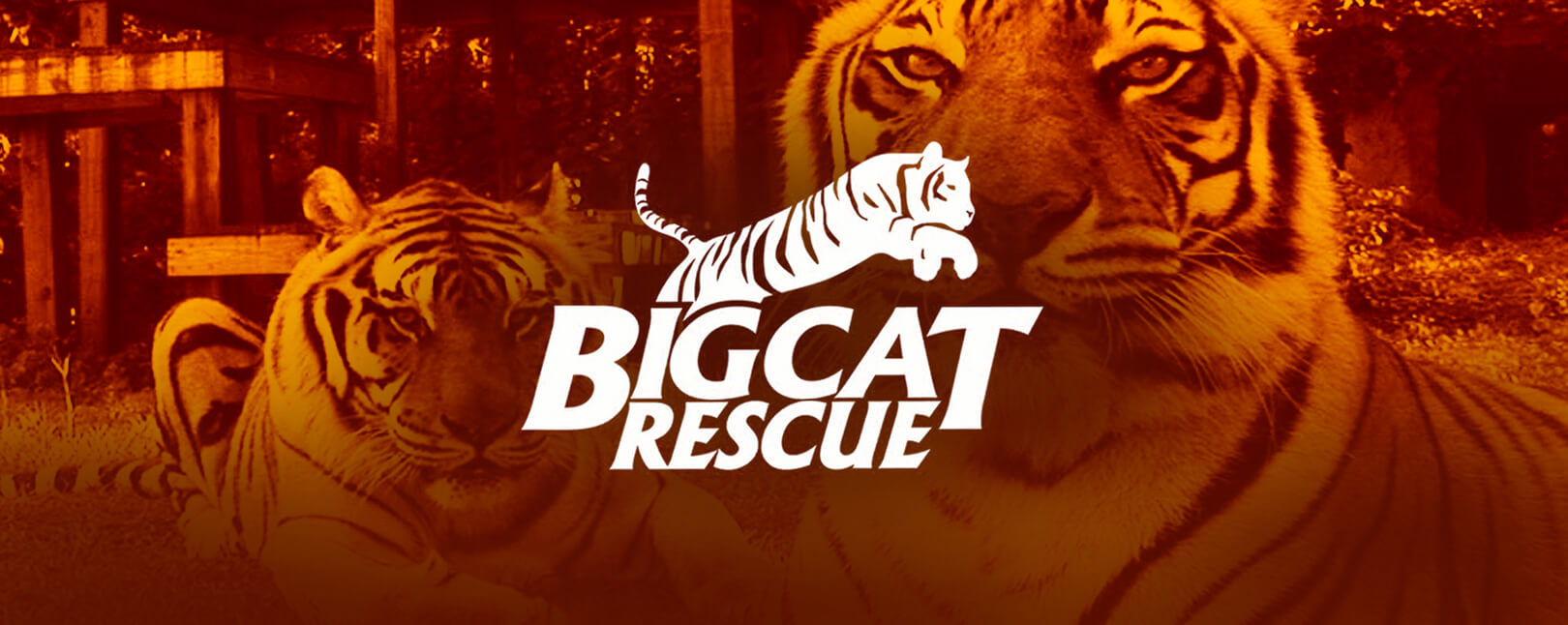 Chargebacks911® Gets Wild With Big Cat Rescue